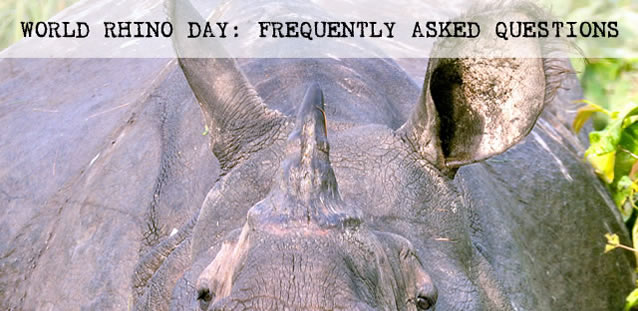 Questions about World Rhino Day