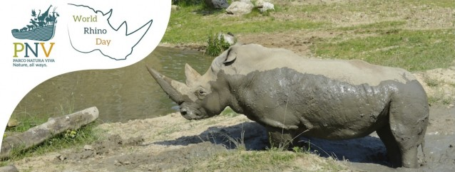 PNV worldrhinoday[1](1)