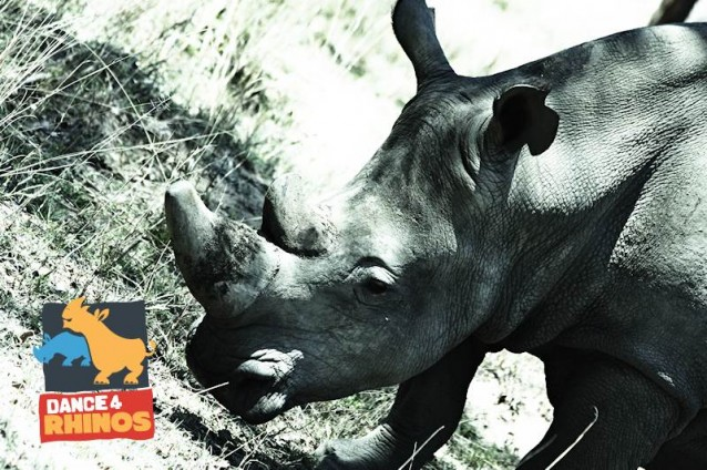 Cameroon will celebrate World Rhino Day with Dance4Rhinos!