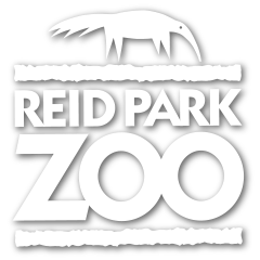 reidparkzoo_shadow