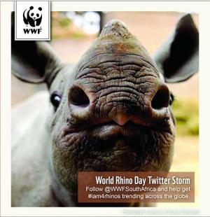 Join the WWF Twitter storm! #iam4rhinos