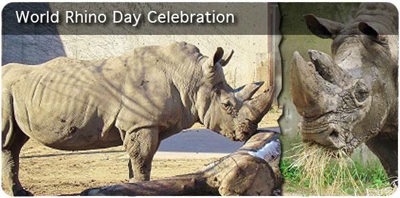 69540_world-rhino-day-banner
