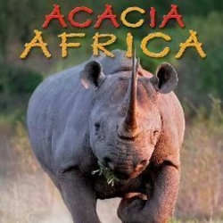 Aca rhino