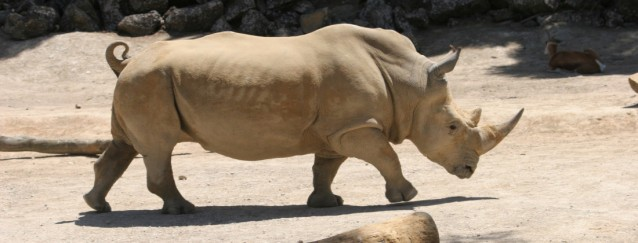 photo via Auckland Zoo website
