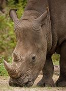 photo via Lowry Park Zoo website