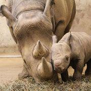 Photo via St. Louis Zoo website