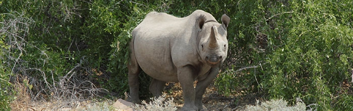 Celebrate World Rhino Day with the Minnesota Zoo!