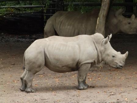 Abebi courtesy of Zoo Dortmund